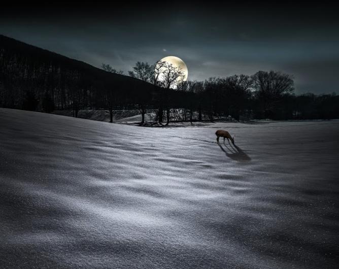 moonanddeer